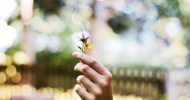 flower-1210067_1280